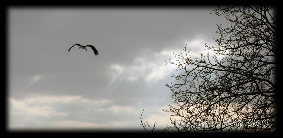 En vol