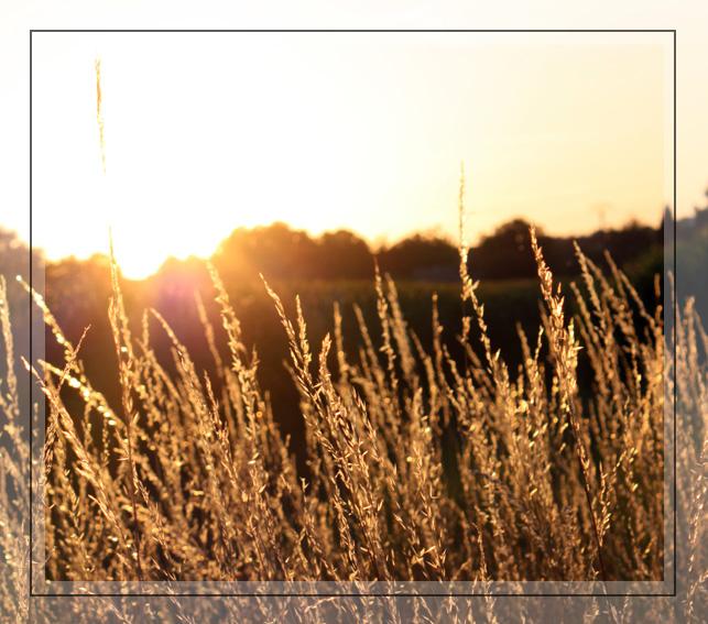Coucher de soleil dans les herbes hautes